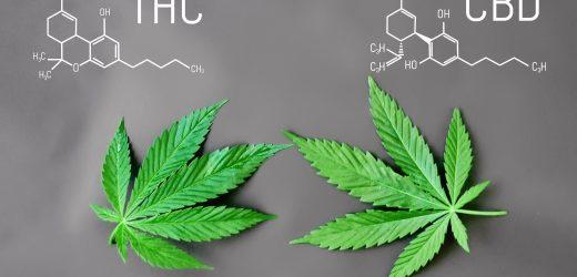 THC et CBD : quelle différence ?